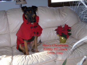 Merry Christmas from my dog Sissy!