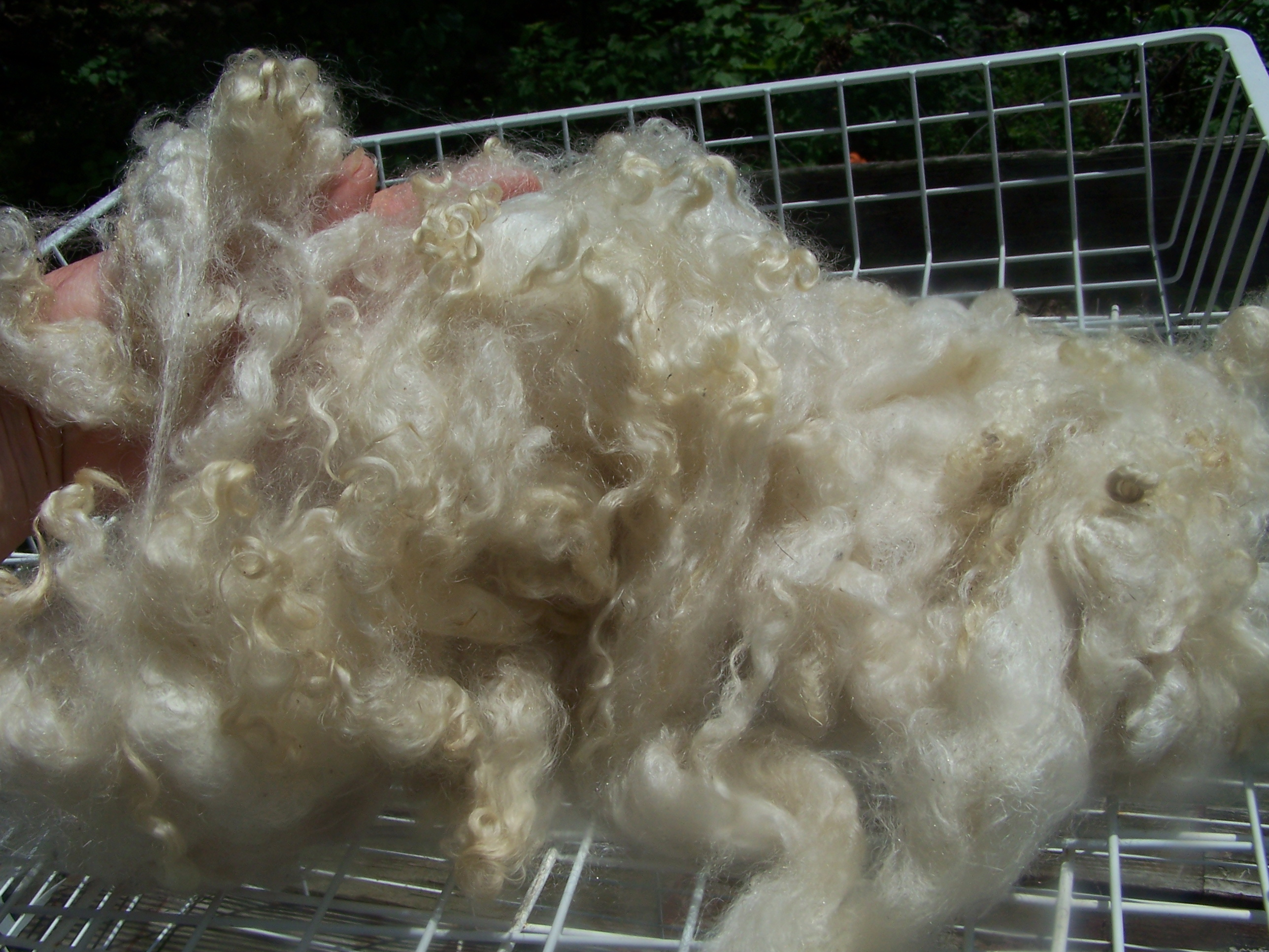 Wool for Spinning - MacopinFarm com
